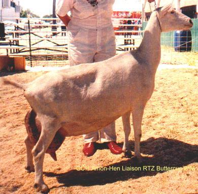 Dairy Goat Handbook